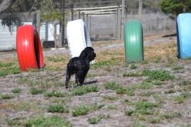 Banksia Park Puppies Jodel - 1 of 27 (13)