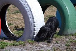 Banksia Park Puppies Jodel - 1 of 27 (18)