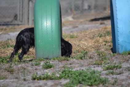 Banksia Park Puppies Jodel - 1 of 27 (3)