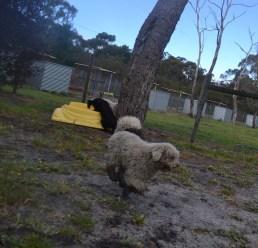 banksia-park-puppies-jodel-11-of-31