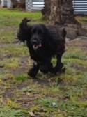 banksia-park-puppies-jodel-16-of-31