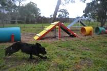 banksia-park-puppies-jodel-19-of-31