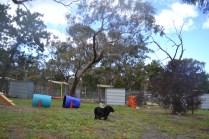 banksia-park-puppies-jodel-7-of-31