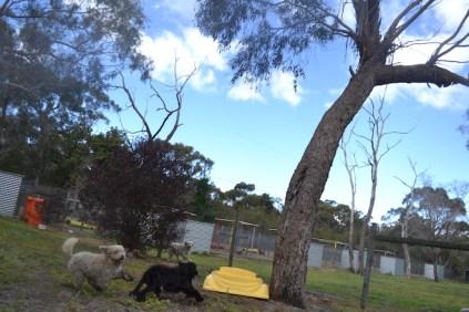 banksia-park-puppies-jodel-9-of-31