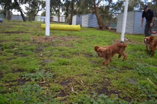 banksia-park-puppies-pia-34-of-34