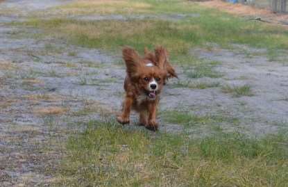 banksia-park-puppies-pippi-1-of-17