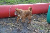banksia-park-puppies-pippi-7-of-17