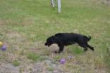 banksia-park-puppies-julia-josepha-10-of-39