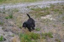 banksia-park-puppies-julia-josepha-22-of-39