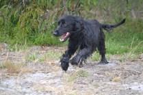banksia-park-puppies-julia-josepha-25-of-39