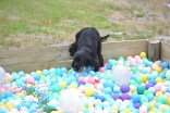 banksia-park-puppies-julia-josepha-4-of-39