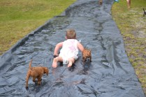 banksia-park-puppies-slip-and-slide-9