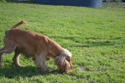 ADULT AGILITY PARK- Banksia Park Puppies - 107 of 117