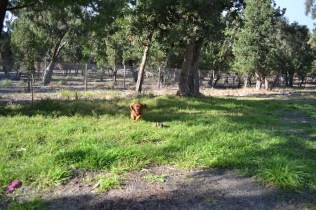 ADULT AGILITY PARK- Banksia Park Puppies - 115 of 117