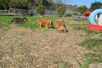 ADULT AGILITY PARK- Banksia Park Puppies - 31 of 117