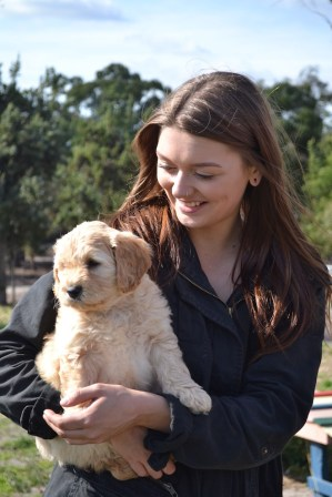 Banksia Park Puppies Animal Studies - 1 of 30 (2)
