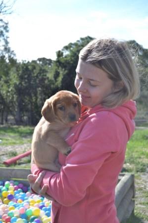 Banksia Park Puppies Animal Studies - 1 of 30 (27)