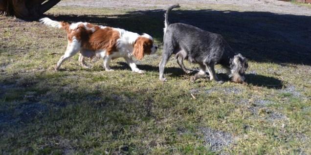 Dasha- Banksia Park Puppies - 12 of 24