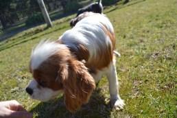 Dasha- Banksia Park Puppies - 17 of 24