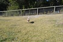Dasha- Banksia Park Puppies - 2 of 24