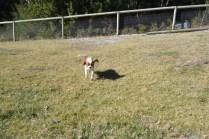 Dasha- Banksia Park Puppies - 3 of 24