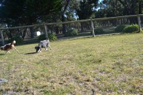 Floss- Banksia Park Puppies - 4 of 22