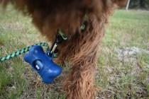 Bobbles-Poodle-6419-Banksia Park Puppies - 36 of 76