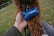 Bobbles-Poodle-6419-Banksia Park Puppies - 37 of 76