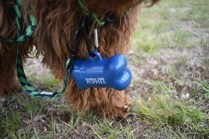 Bobbles-Poodle-6419-Banksia Park Puppies - 50 of 76