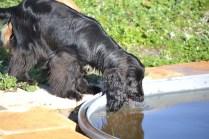 Swish quenching her thirst!