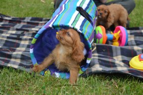 Our young future parents having fun in our Puppy Playground!
