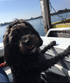 "Pippa Rose, DOB 18.8.17 Dad=Jack Mum=Poppy ""Pippa's first time on the boat. She loved it"""
