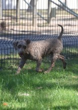 ALVIN - Bankisa park puppies - 1 of 16 (7)