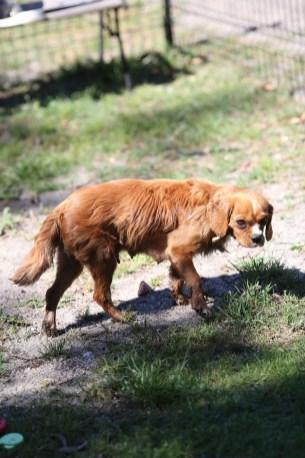 PEACHES - bankisa park puppies - 1 of 28 (10)