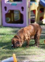 PEACHES - bankisa park puppies - 1 of 28 (13)