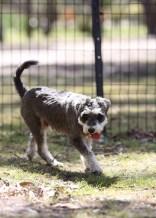 FLEUR - banksia park puppies - 1 of 60 (57)
