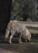 ODIE - Bankisa Park puppies - 1 of 57 (1)
