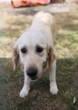 ODIE - Bankisa Park puppies - 1 of 57 (11)