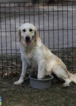 ODIE - Bankisa Park puppies - 1 of 57 (12)