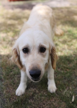 ODIE - Bankisa Park puppies - 1 of 57 (14)