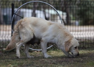 ODIE - Bankisa Park puppies - 1 of 57 (18)