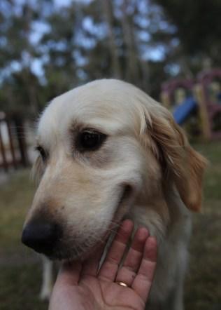 ODIE - Bankisa Park puppies - 1 of 57 (28)