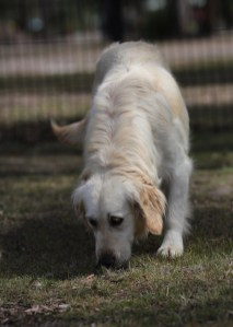 ODIE - Bankisa Park puppies - 1 of 57 (40)