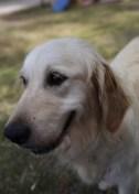ODIE - Bankisa Park puppies - 1 of 57 (55)