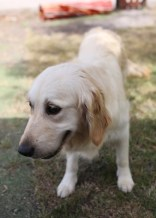 ODIE - Bankisa Park puppies - 1 of 57 (8)