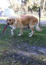 IVY - banskia park puppies - 1 of 50 (23)