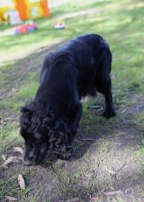 SWISH - Bankisa park puppies - 1 of 22 (17)