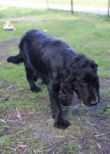 SWISH - Bankisa park puppies - 1 of 22 (7)