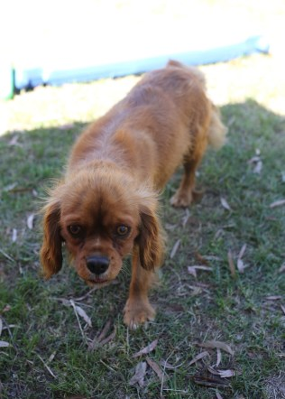 MARY- Bankisa Park Puppies - 1 of 26 (2)