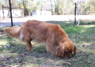 MARY- Bankisa Park Puppies - 1 of 26 (3)